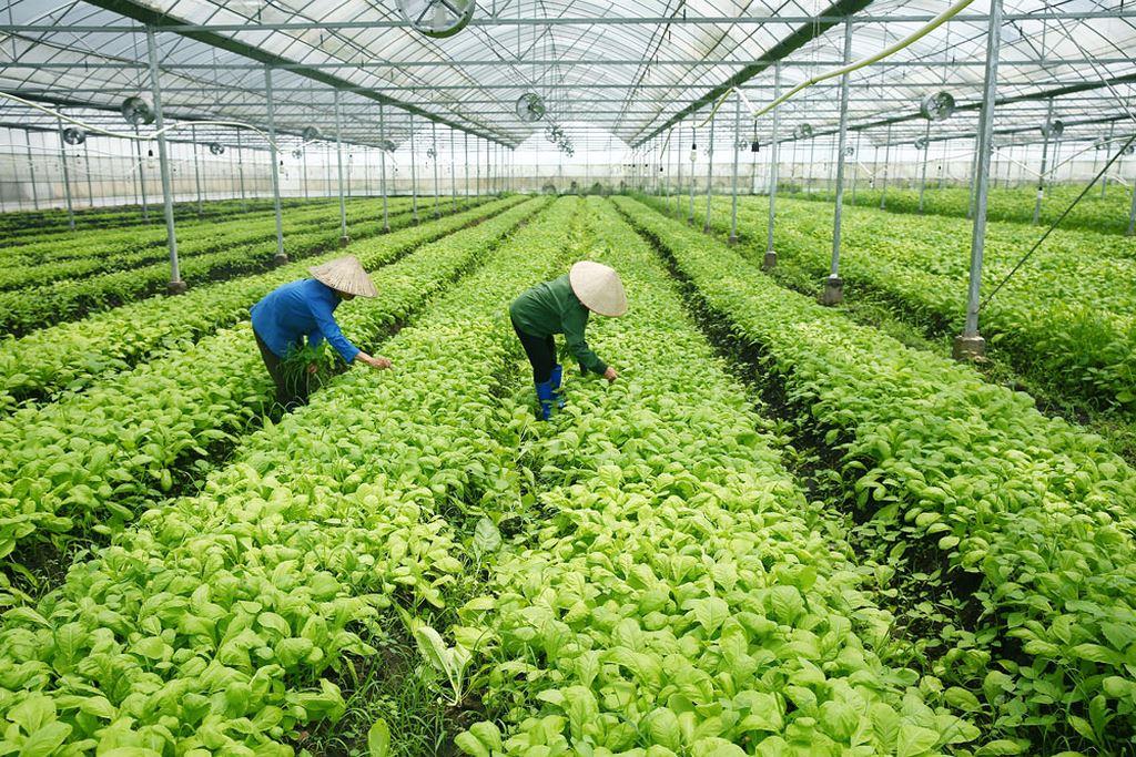 Xây dựng danh mục dự án khuyến khích doanh nghiệp đầu tư vào nông nghiệp, nông thôn cần lưu ý những điểm gì?