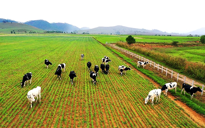 Vốn đầu tư của Việt Nam ra nước ngoài tăng mạnh trong 7 tháng đầu năm 2021