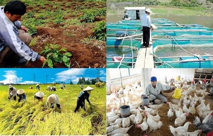 Thời tiết thuận lợi cho sản xuất nông, lâm nghiệp và thủy sản