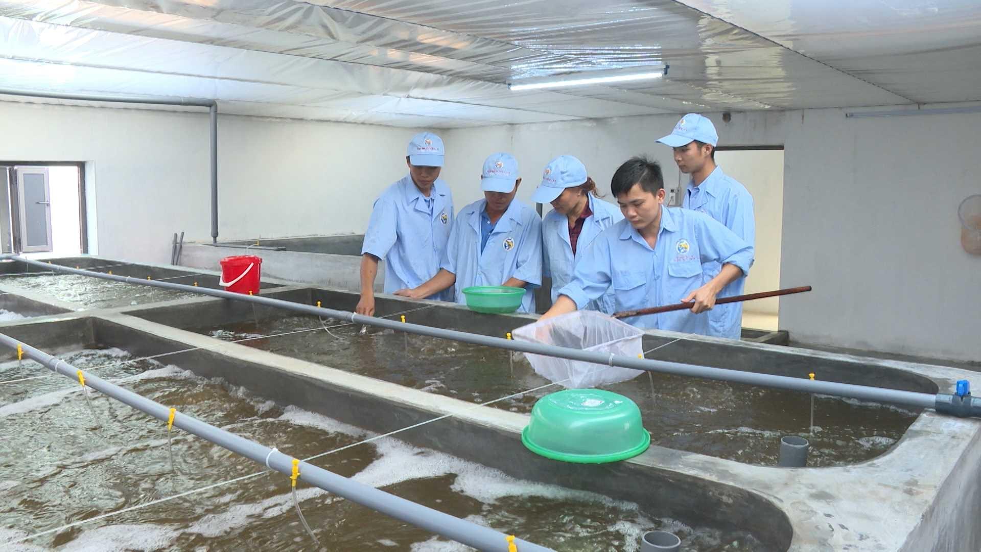 Ngân sách nhà nước hỗ trợ 6 hoạt động phát triển sản xuất giống