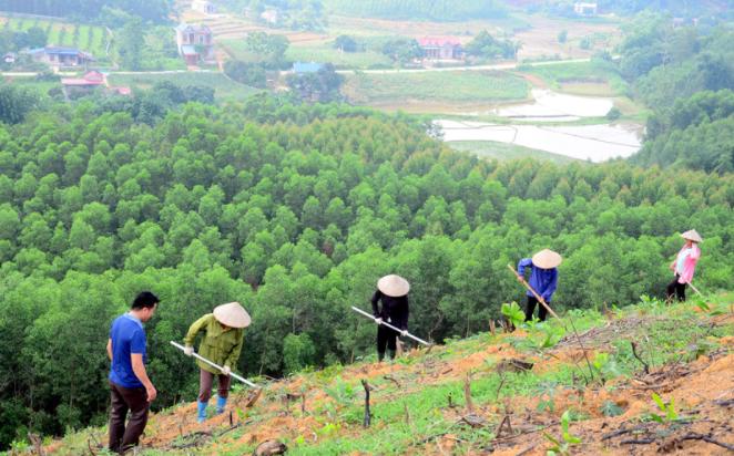 Giai đoạn 2021-2025, trồng mới 11.000 ha rừng để ứng phó với biến đổi khí hậu