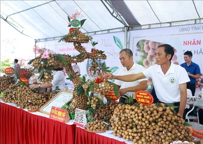Nhãn lồng Hưng Yên sắp được giới thiệu với thị trường quốc tế