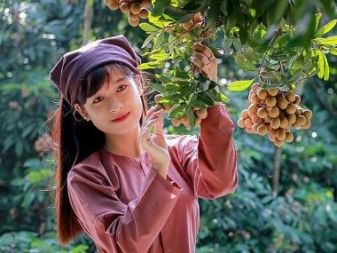 Sự kiện quy mô quốc tế kết nối tiêu thụ nhãn và nông sản tỉnh Hưng Yên