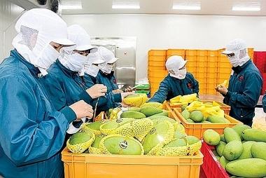 Cơ hội cho doanh nghiệp Việt Nam từ thị trường nông sản Anh