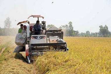 Bộ Công thương kiến nghị hỗ trợ tín dụng cho DN kinh doanh thóc, gạo